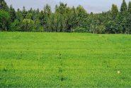 غصب جنگلات امامصاحب کندز از سوی زورمندان