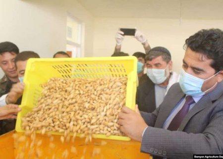 افتتاح نخستین کارخانه پروسس بادام دایکندی؛ پس از این بادام با مارک دایکندی صادر می شود